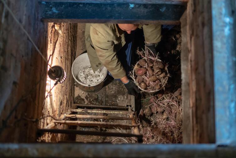 Человек в подвале сортирует картошку