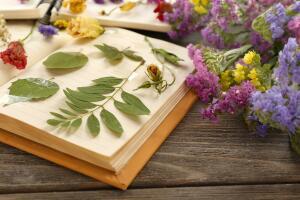 Как засушить растения для создания сухой цветочной композиции?