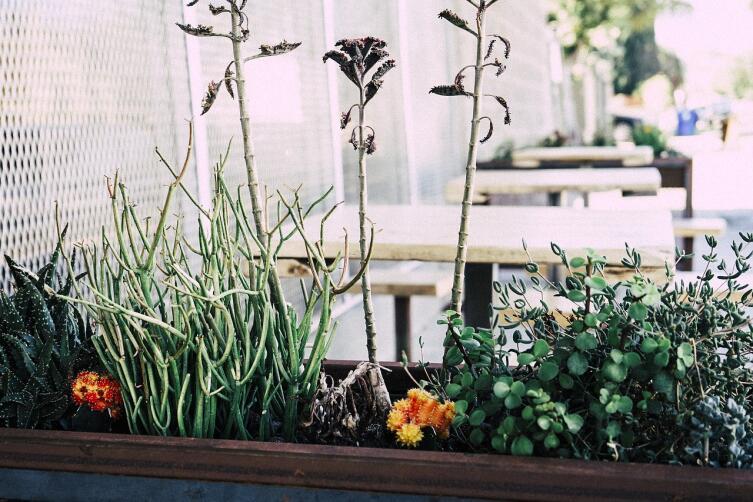 На состоянии цветов, растущих дома, плохо сказывается злоупотребление удобрениями