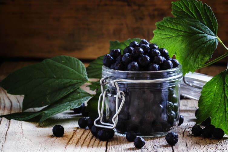 Чем полезна черноплодная рябина?
