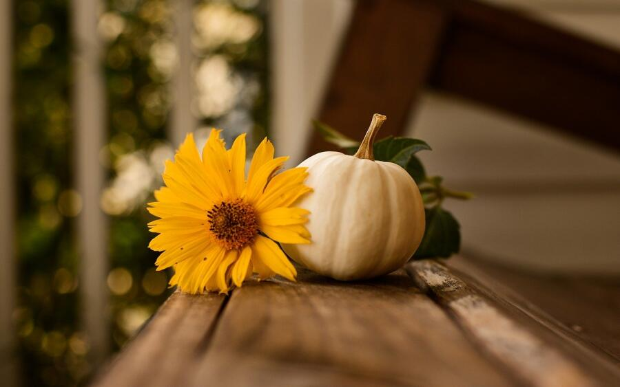 Как использовать тыкву для пользы и удовольствия?