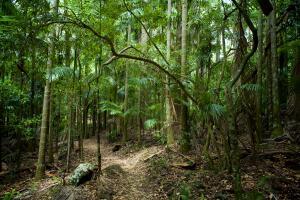 Кто обитает в подстилке тропического леса?
