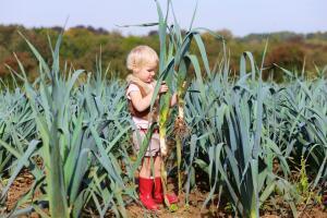 Как выращивать лук-порей? С удовольствием!