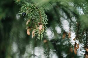 Как елка сдружила лесных обитателей? Сказка о дружбе