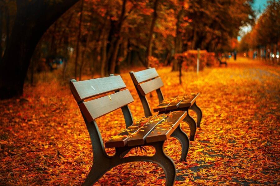 Чем опасны опавшие листья? Меры безопасности в золотую осень