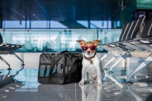 Каковы правила перевозки собак в России?
