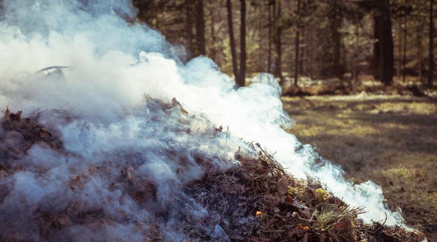 Почему не следует сжигать опавшие листья?