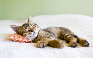 Почему кошка любит спать в хозяйской постели?