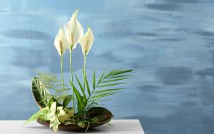 Какие комнатные растения способны привлечь в дом любовь и счастье?