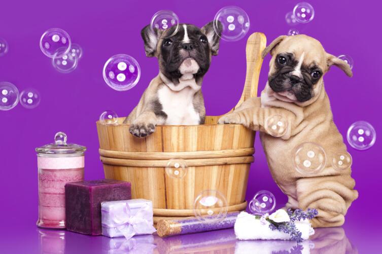Если в доме пахнет псиной: как обойтись без ежедневного мытья питомца?