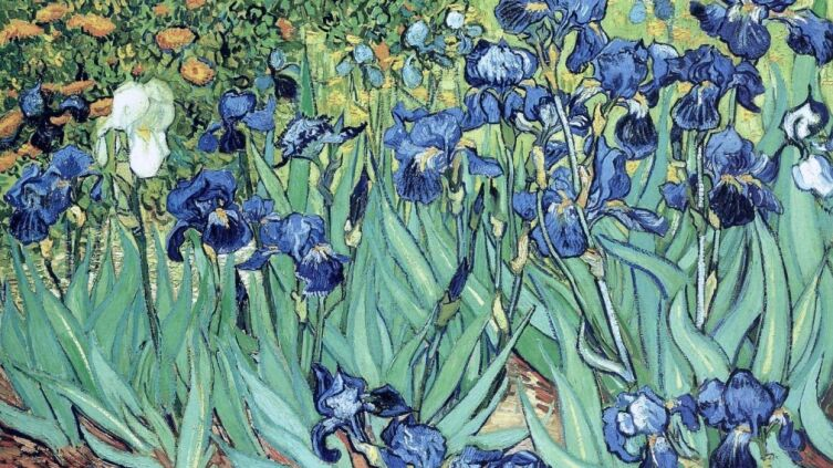 Винсент Ван Гог, «Ирисы», 1889 г.