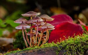 Как появились и развивались грибы на Земле?