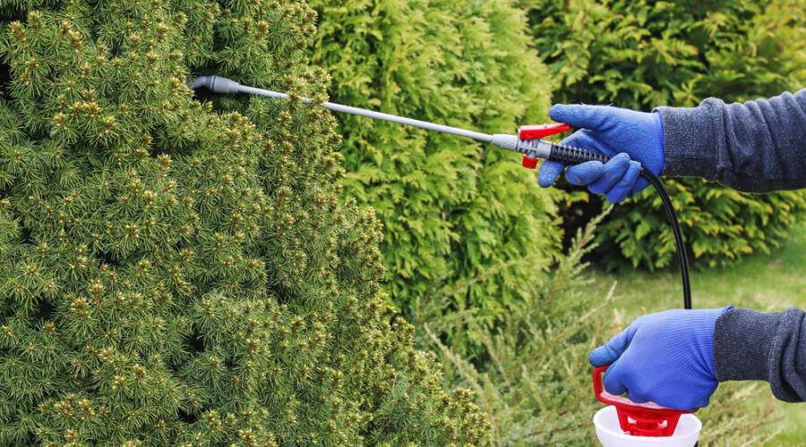 Как бороться с паутинным клещом?
