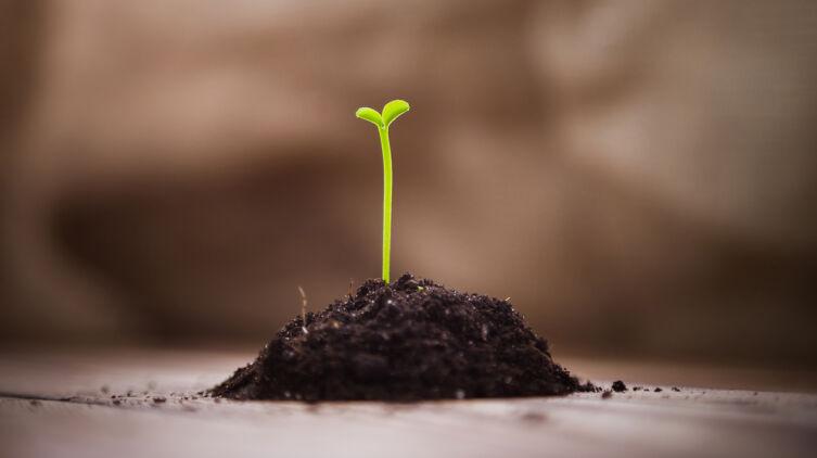 Что можно вырастить из косточки купленного в магазине плода?