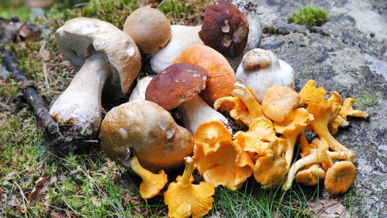 Как можно использовать грибной отвар?