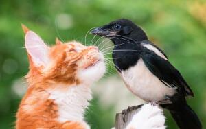 Как люди и птицы могут помочь друг другу?