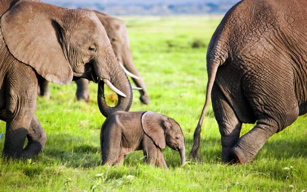 Слонопедия, или Что мы знаем о слонах?