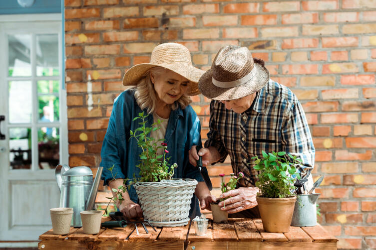 Как использовать спитый чай на огороде и дома?