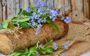Как вырастить незабудки в саду?