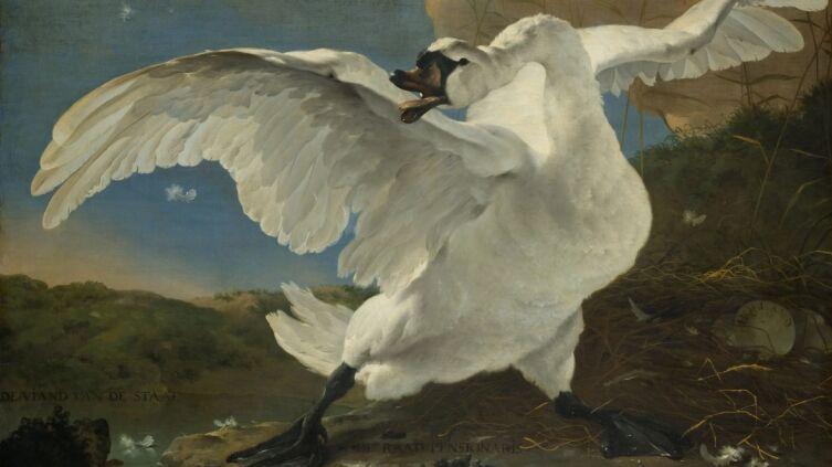 Ян Асселейн, «Угрожающий лебедь», 1650 г.