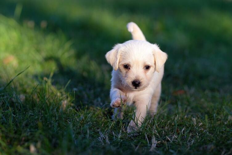 Как обучить собаку команде «Ко мне!»?
