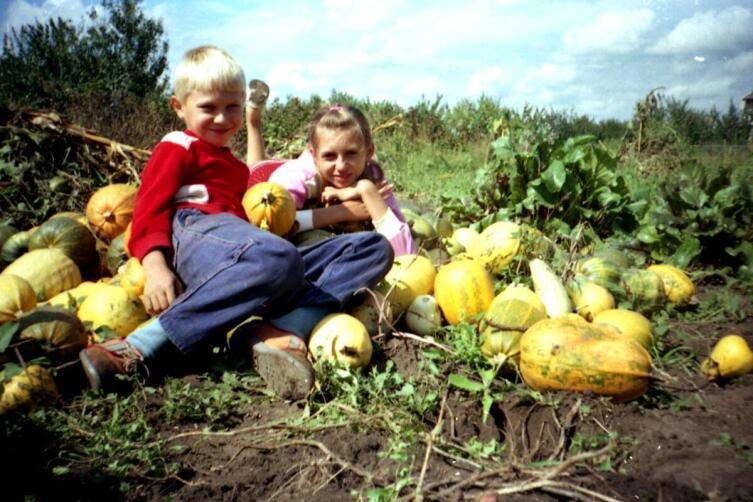 Дети на даче помогают убирать урожай. 1992 г.
