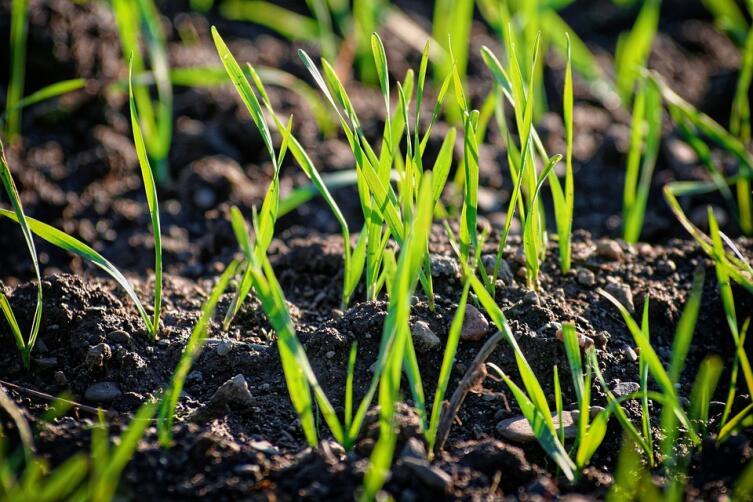 «Эпин». Зачем растениям стимуляторы роста?
