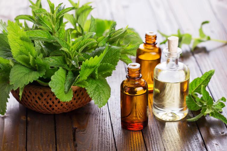 Лекарственные растения. Где используется мята?