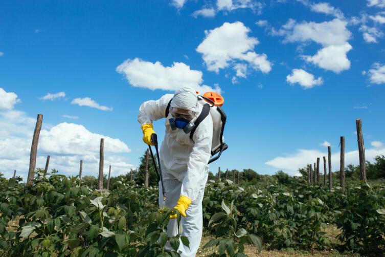 Международный день борьбы с пестицидами. Можно ли обойтись без «химии»?