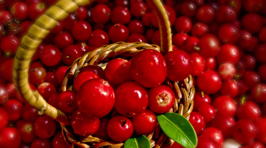 Какие плоды и ягоды помогут улучшить состояние здоровья?