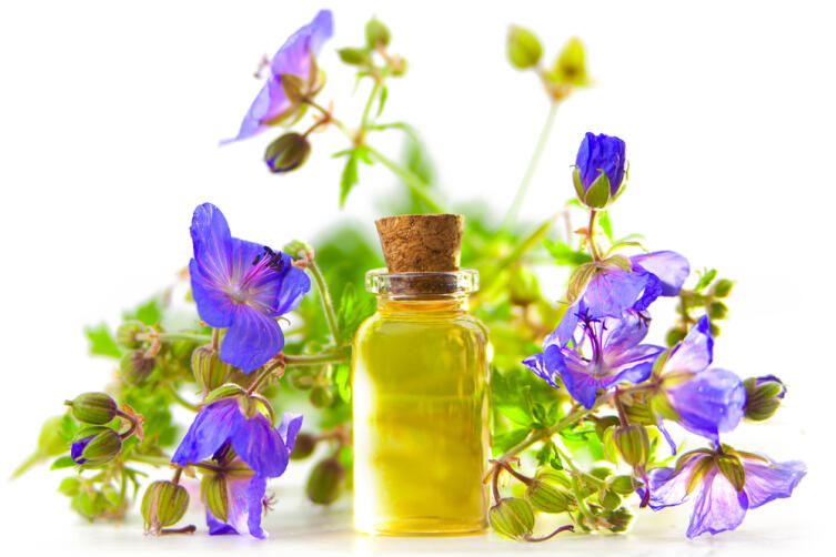 Лекарственные растения. Чем полезна полевая герань?