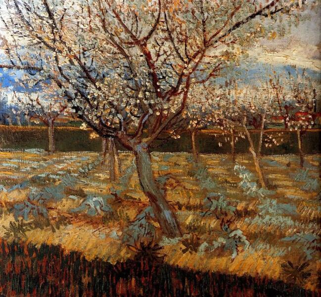 Винсент Ван Гог, «Цветущие абрикосы», 1888 г.