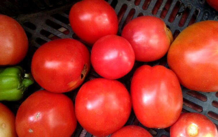 Томаты для кетчупа с дачи