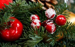 Почему ель — это новогоднее дерево?