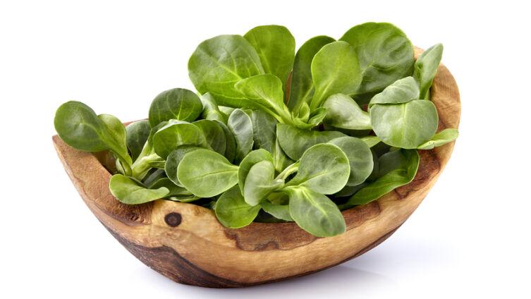 Валерианелла огородная, или Полевой салат