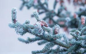 Когда сажать деревья? Зимой!