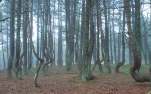 Где находится танцующий лес и когда в Женеву приходит весна?