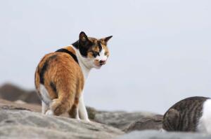 Трехместная кот