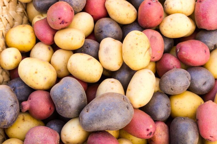 Когда человек «приручил» картошку?