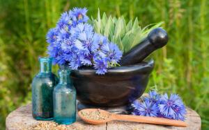 Как используют косметическое масло соцветий василька?