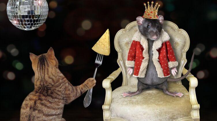 Крысиный король: существует ли он в реальности?