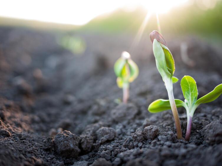 Нужна ли семенам предпосадочная подготовка?