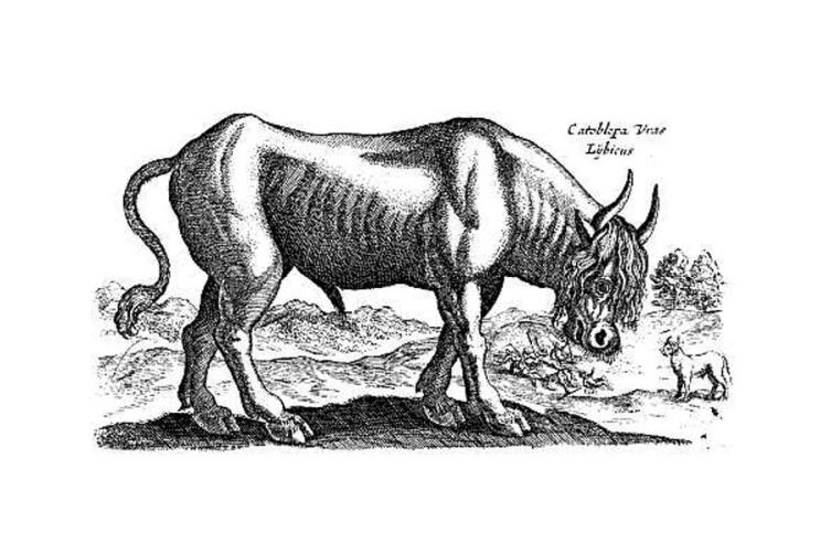 Катоблепас из «Historia naturalis de quadrupedibus», 1614 г.