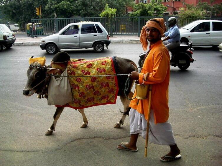Час Быка-6. Можно ли влюбиться в быка или корову?