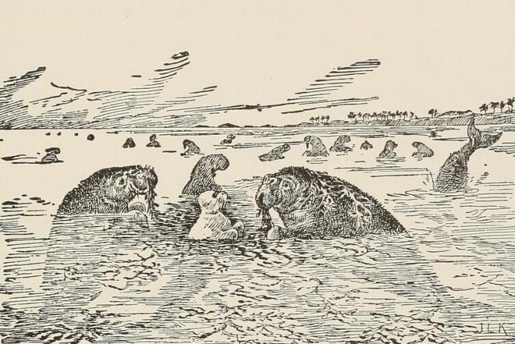Иллюстрация к повести Р. Киплинга «Белый котик», изображающая морских коров