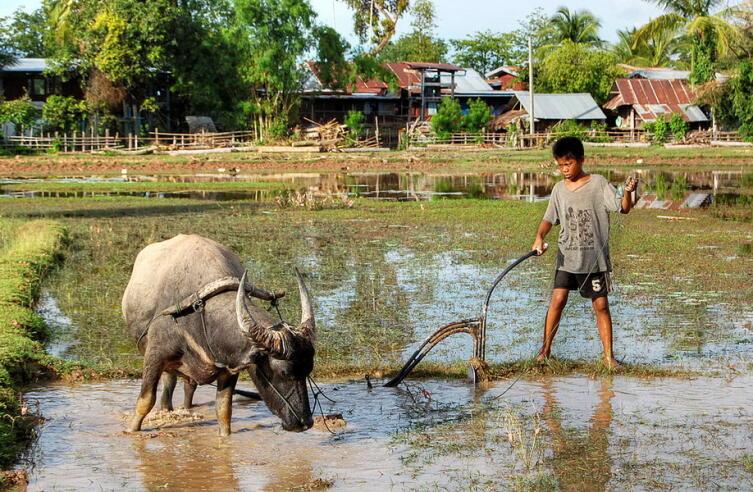 Час Быка-9. Как живут дикие быки тропиков?
