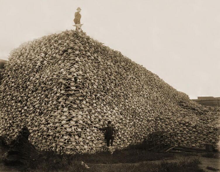Гора из черепов убитых бизонов, США, 1870 г.