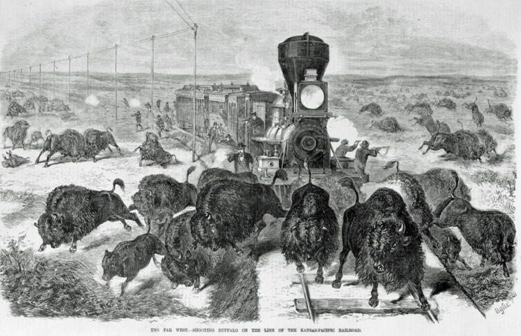 Расстрел бизонов на трансконтинентальной железной дороге. Гравюра XIX века