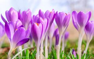 Какие декоративные растения обладают целебными свойствами?