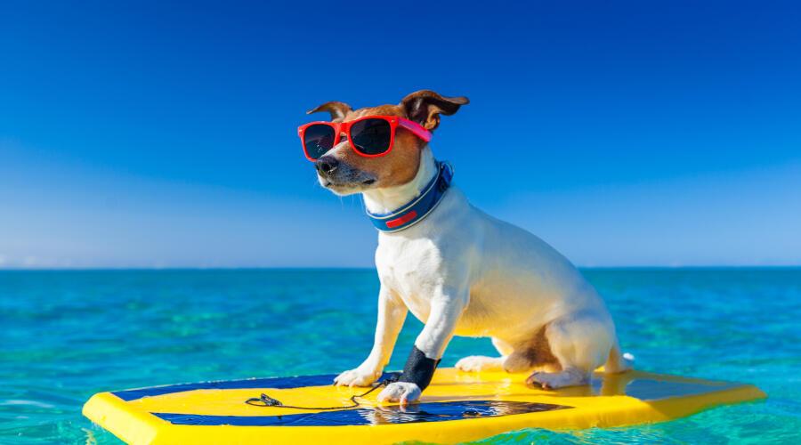Есть ли у собак эпизодическая память?